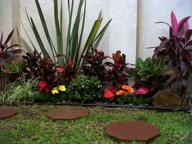 Crotos tirabuzon para dar color a media sombra marzo for Jardines con gravilla de colores